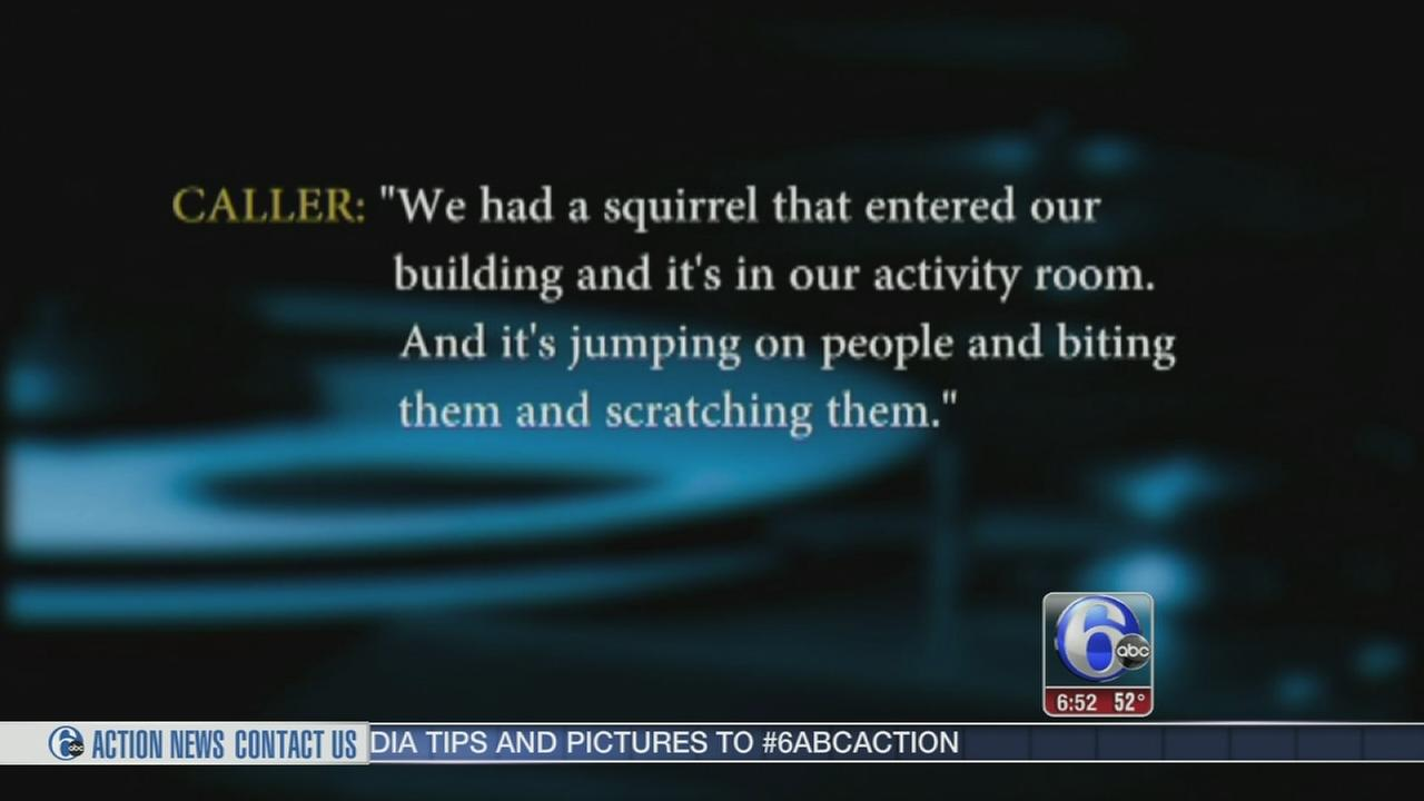 VIDEO: Squirrel attacks seniors at living facility