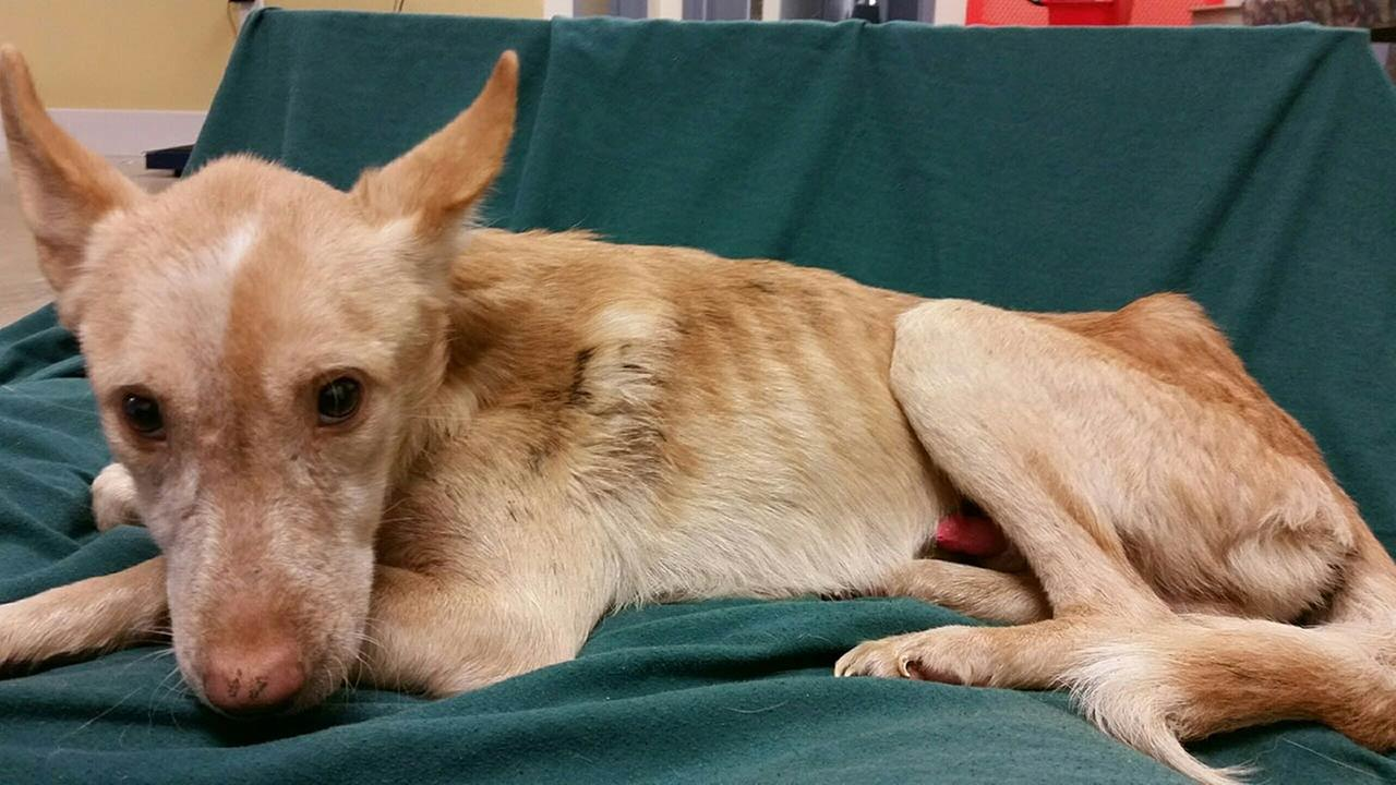 14 severely neglected dogs rescued in Millsboro, Del.