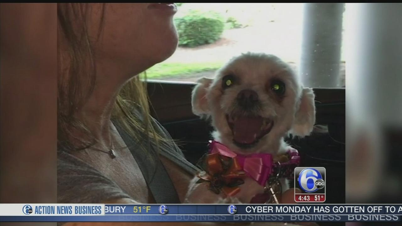 VIDEO: Dog missing for 3 years reunited with family