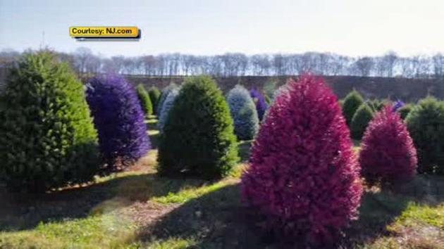 New Jersey tree farm creates colored Christmas trees | 6abc.com