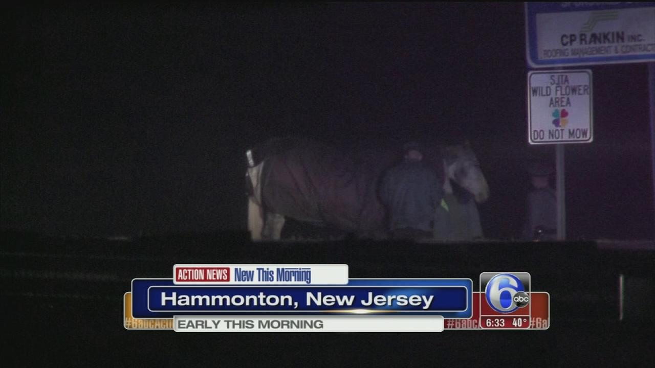 VIDEO: Loose horses cause 3 crashes on AC Expressway