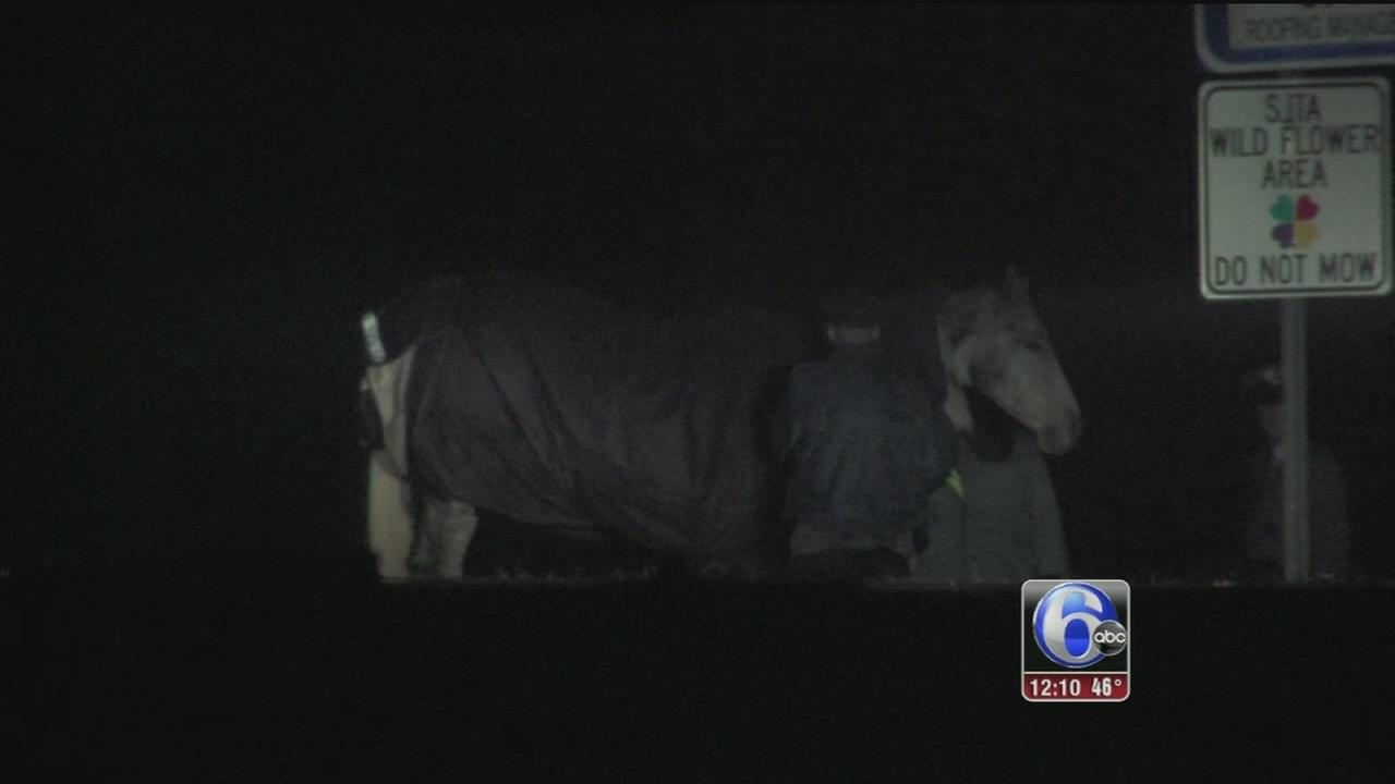 VIDEO: Horse struck, killed on AC Expressway; 2nd horse captured
