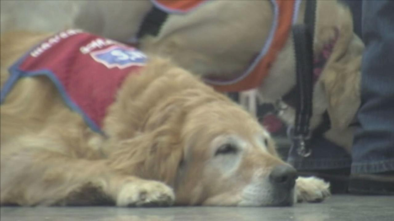 VIDEO: Lowes hires veteran and his therapy dog