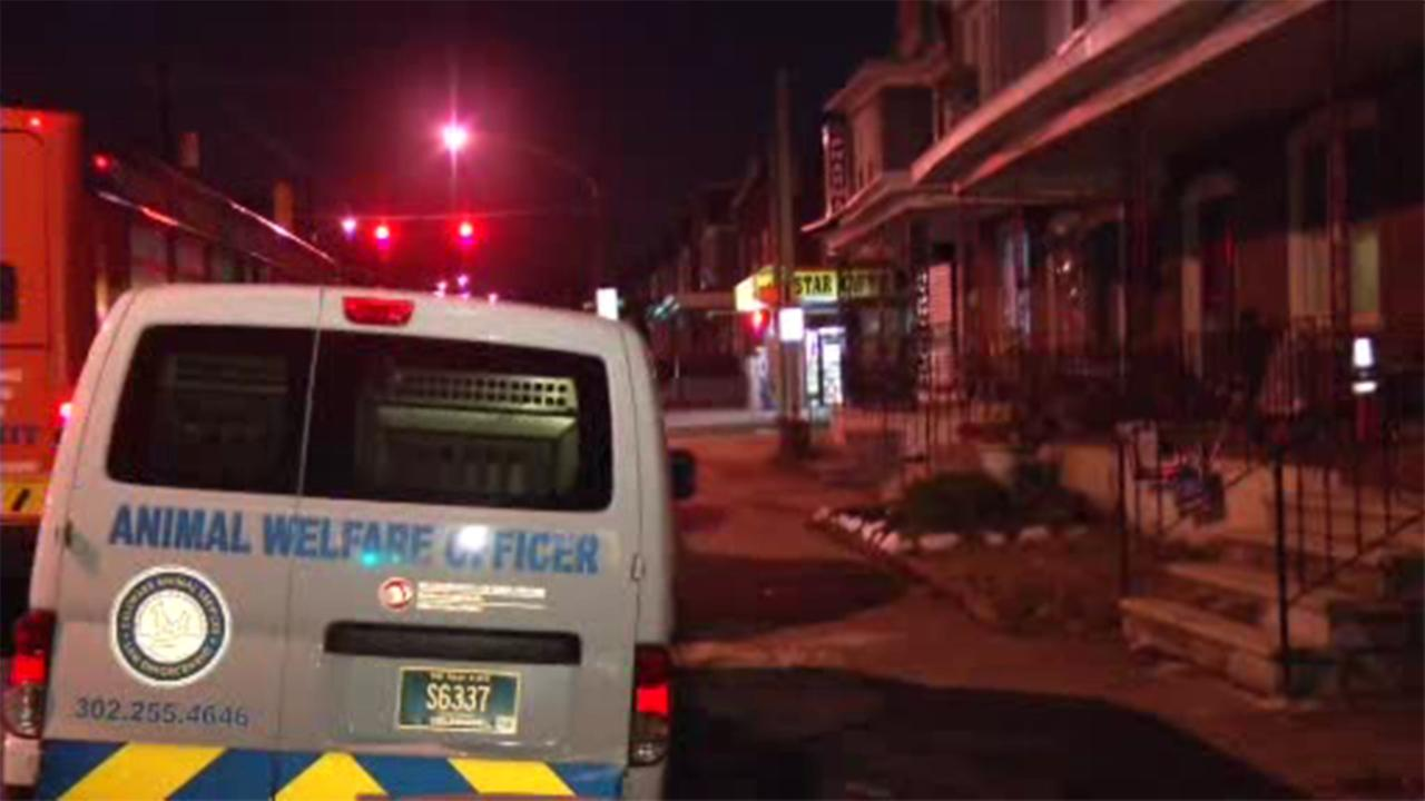 A boy is hospitalized after being attacked by a pit bull in Wilmington, Delaware.