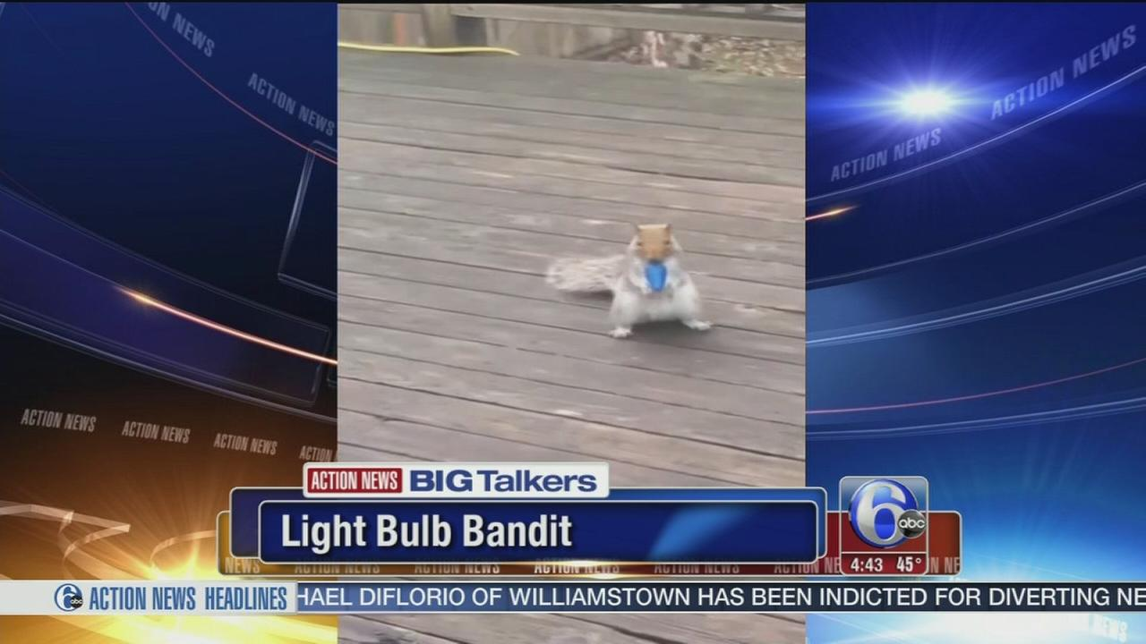 VIDEO: Squirrel steals Christmas lights in Seattle