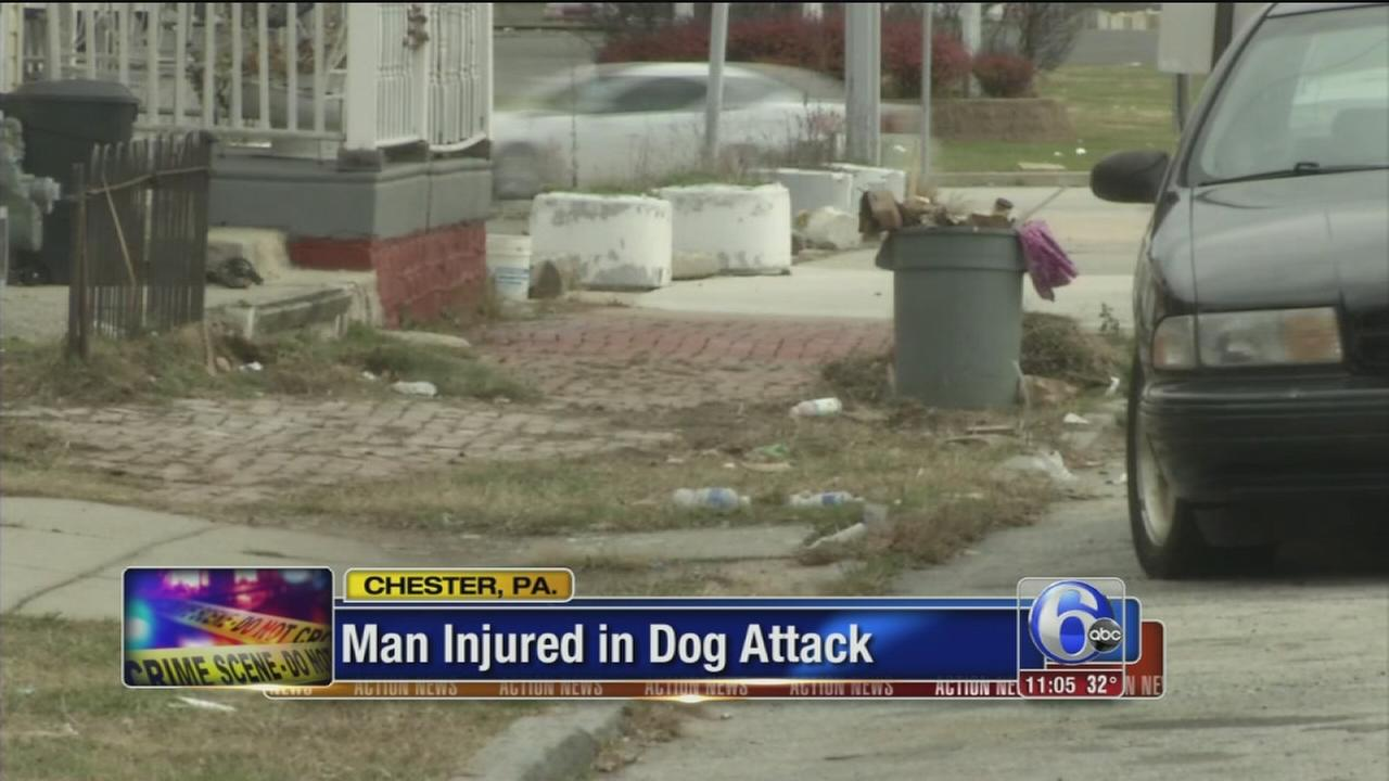 VIDEO: Dog attack