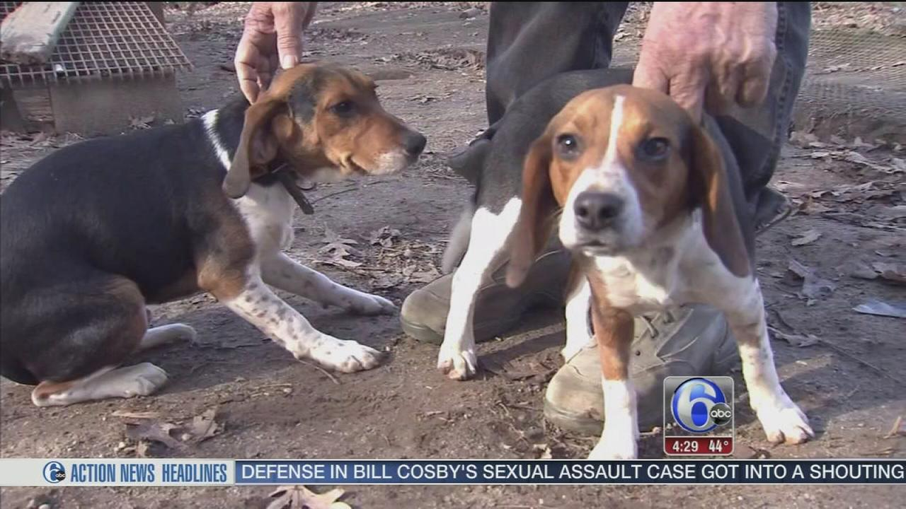 Who poisoned six-month-old beagle puppies?