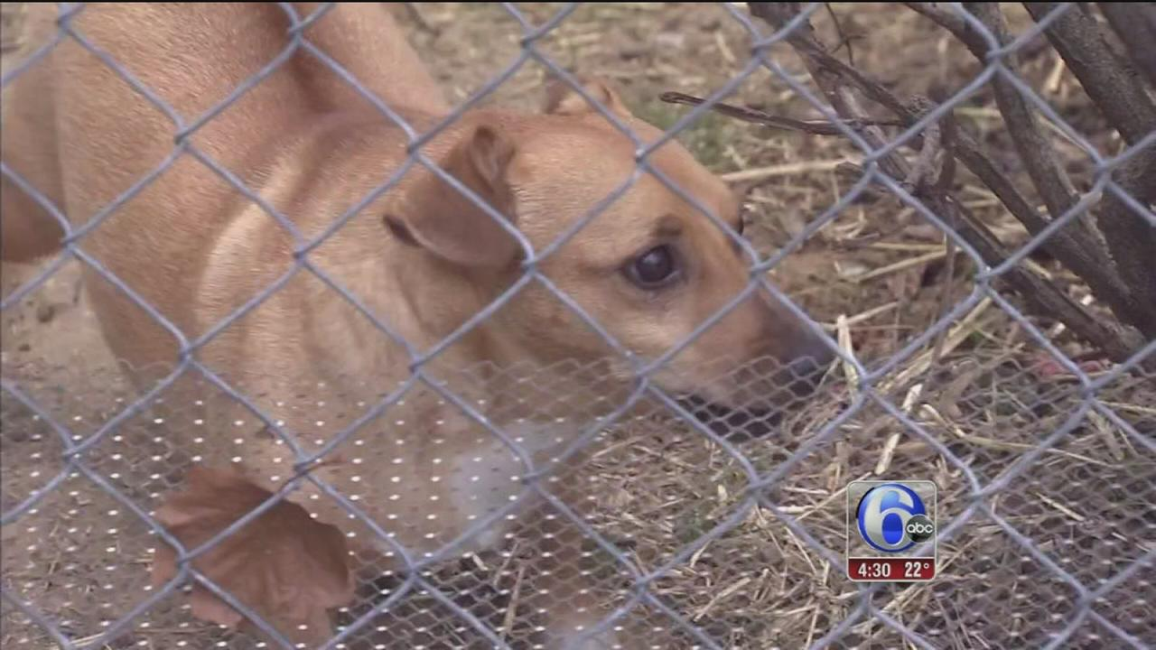 Animal cruelty investigators seek pets left out in the cold