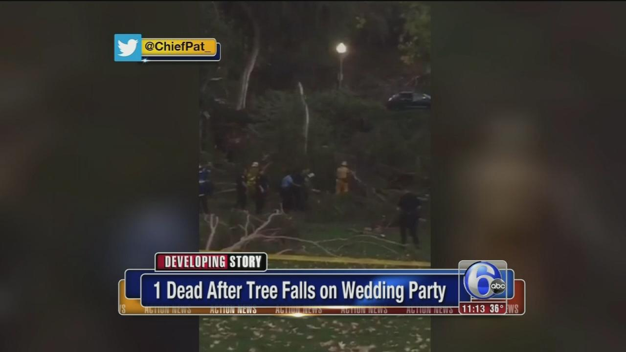 1 dead, 5 injured after large tree falls