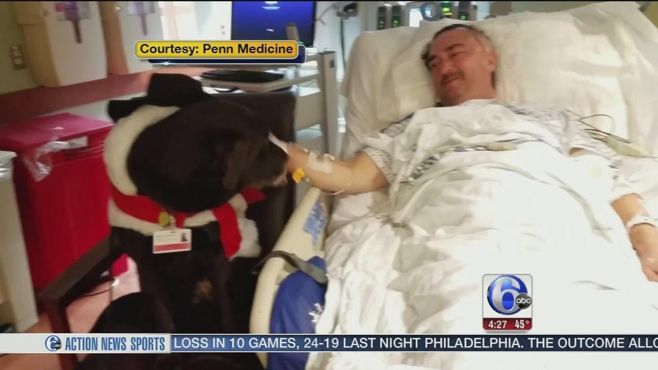 VIDEO: Comfort dog brings cheer to Penn Medicine Patients