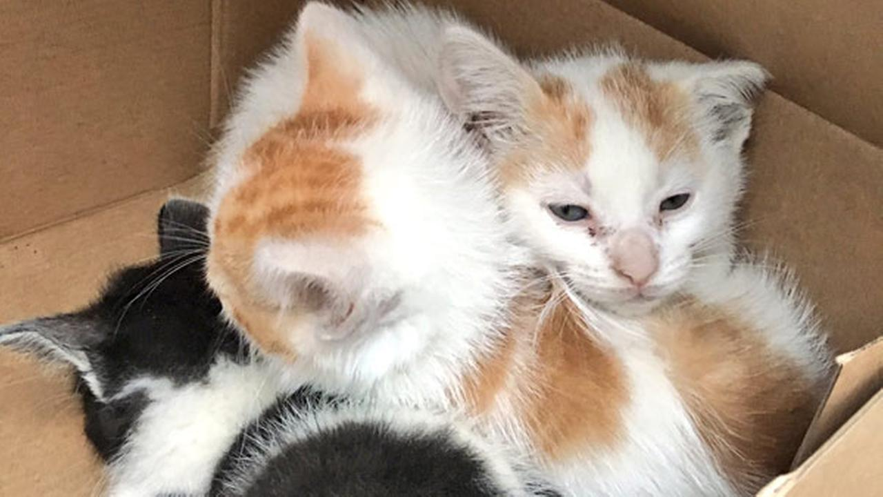 Crews find family's cats after Kensington fire damages home
