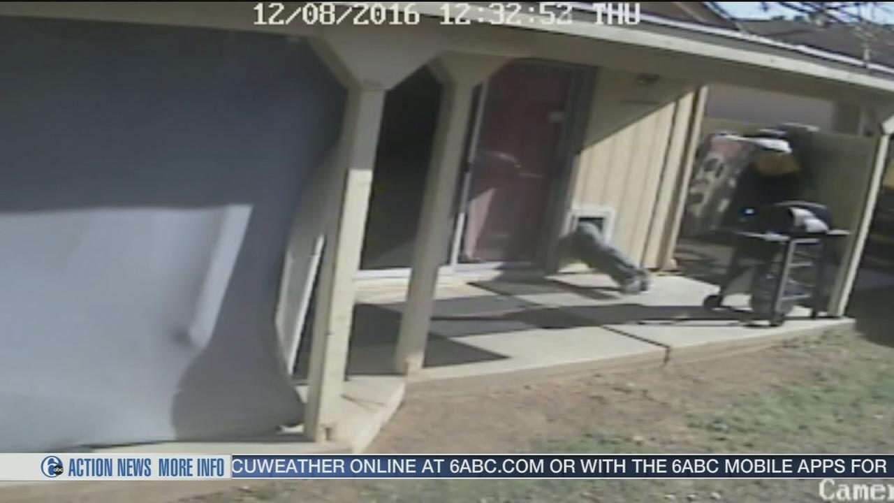 Thief squeezes into doggy door to break into home
