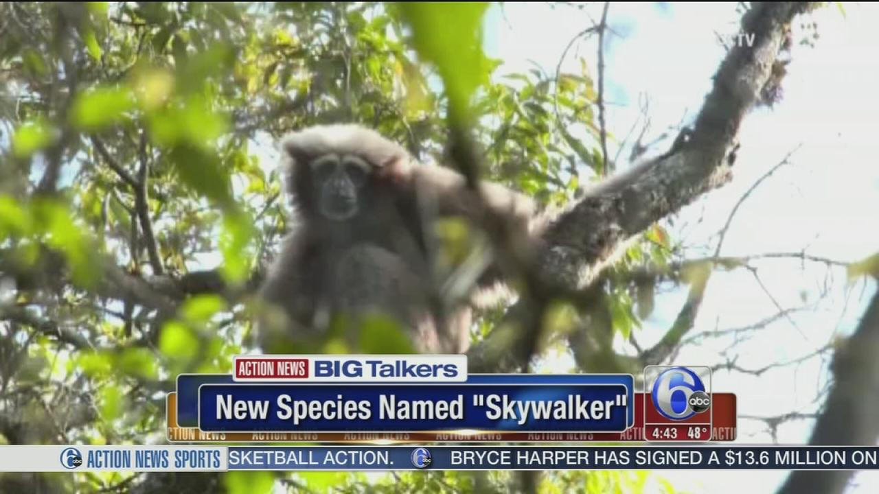 Scientists name new gibbon species Skywalker