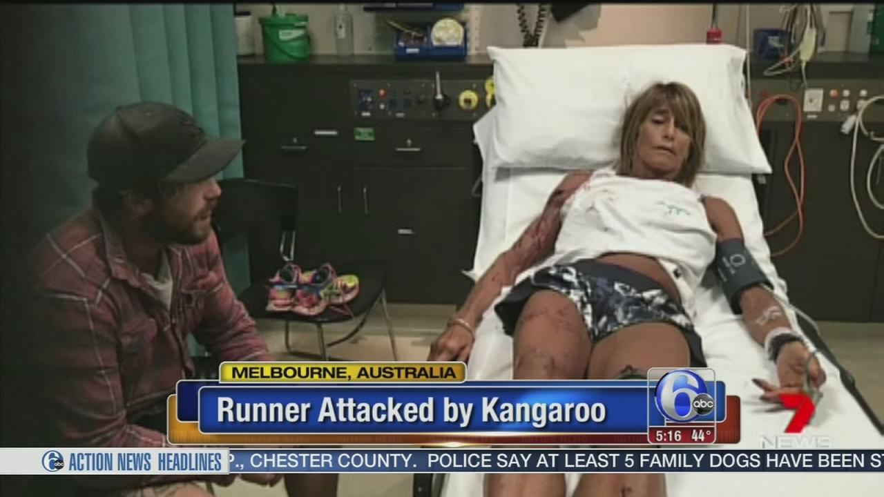 Runner attacked by kangaroo in Australia