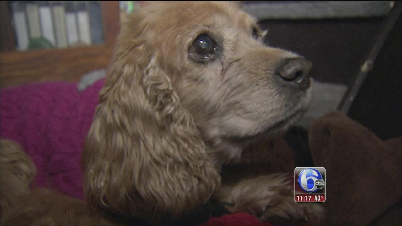 Monkeys House gives aging, ailing dogs a home