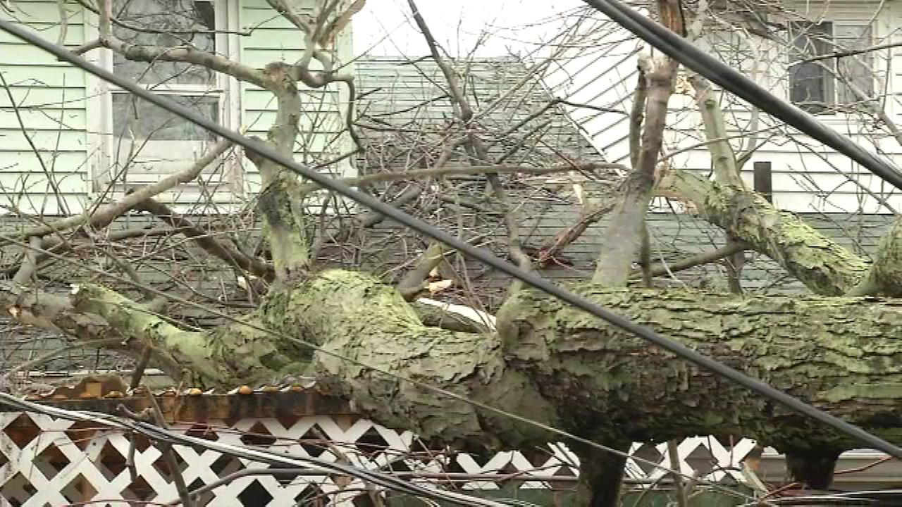 A tree damaged a home and a fence in New Castle, Delaware on January 23.
