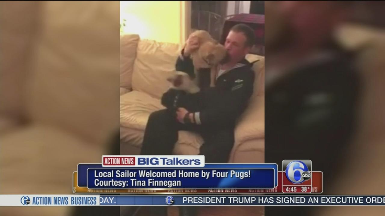Philadelphia Navy Airman welcomed home by 4 adorable pugs