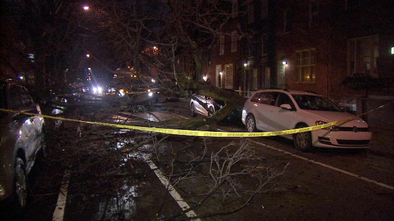 A tree fell on vehicles at Moyamensing and Carpenter streets in South Philadelphia on Jan. 23.