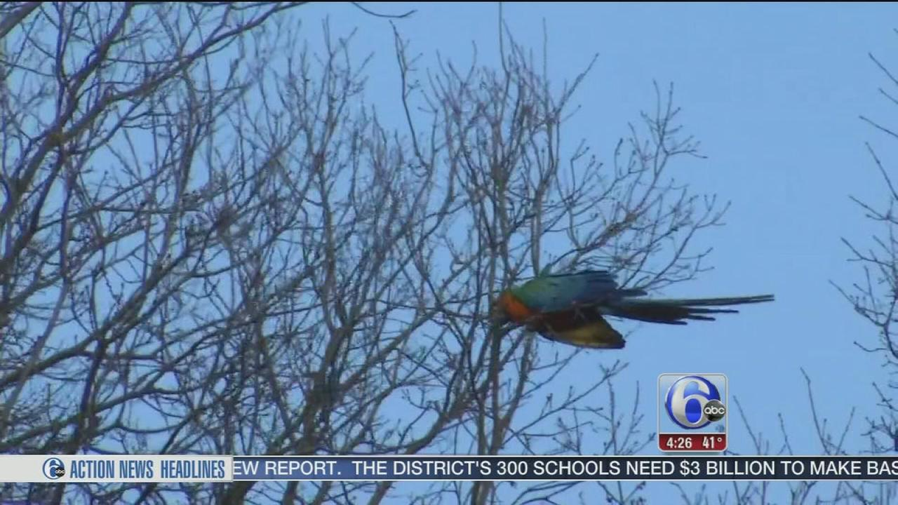 Exotic bird escapes owner?s home in North Wilmington
