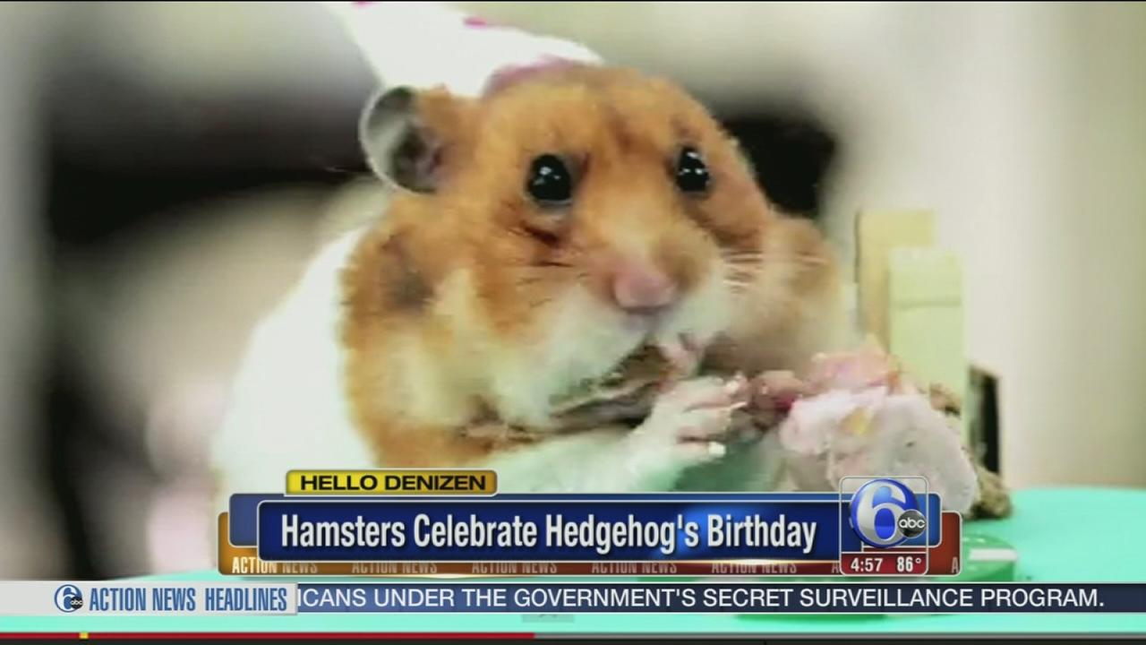 VIDEO: Hamsters celebrate Hedgehogs birthday
