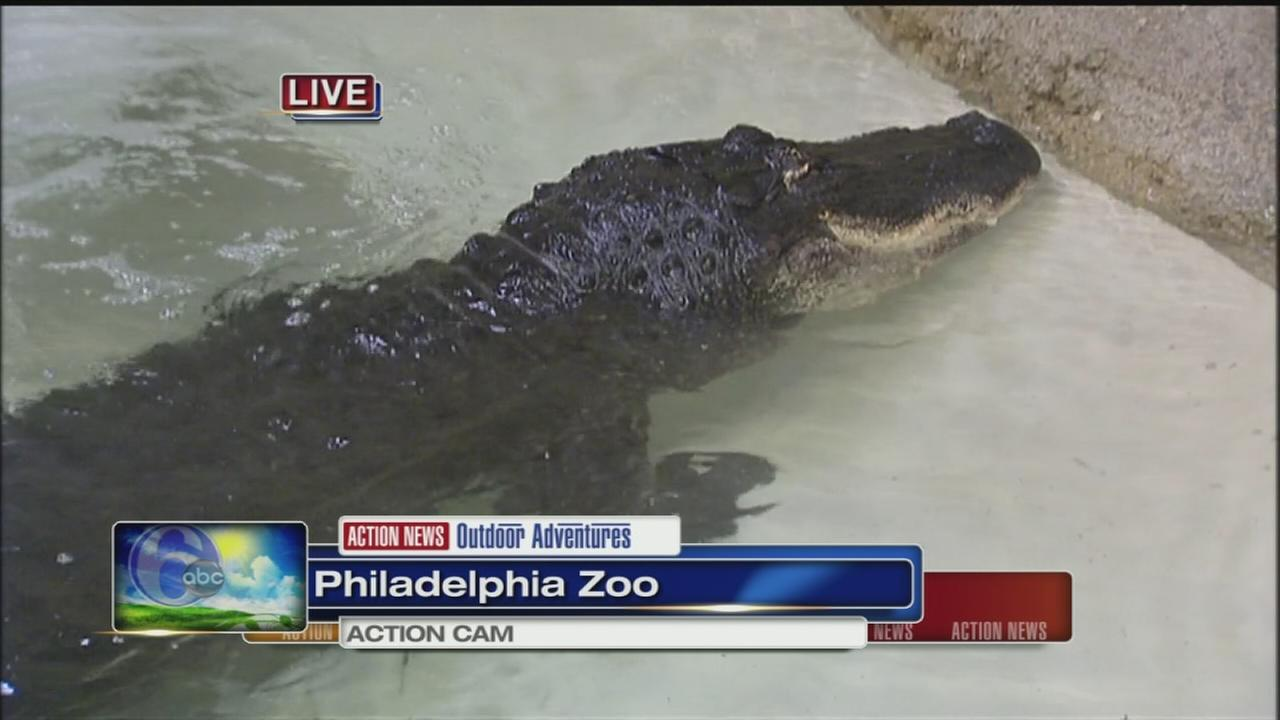 VIDEO: Cecily at the Zoo with an alligator
