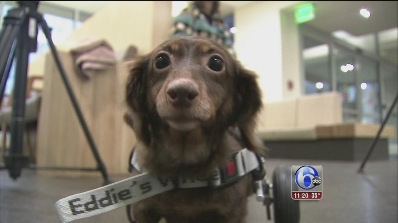 Dog found in trash bag finds forever home