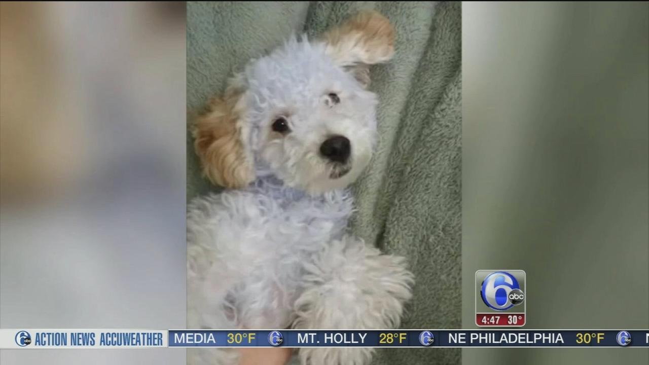 Dog held for ransom in Atlanta