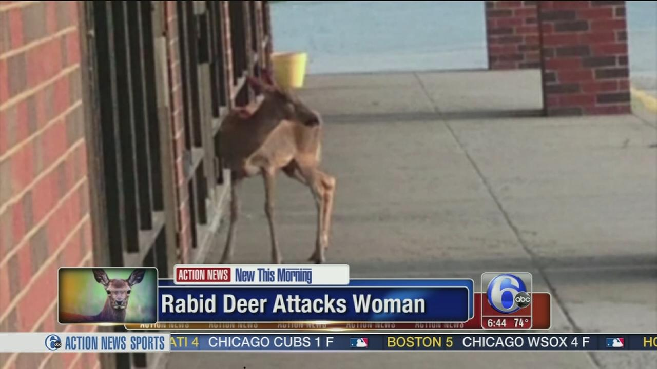 VIDEO: Rabid deer attacks Pennsylvania woman