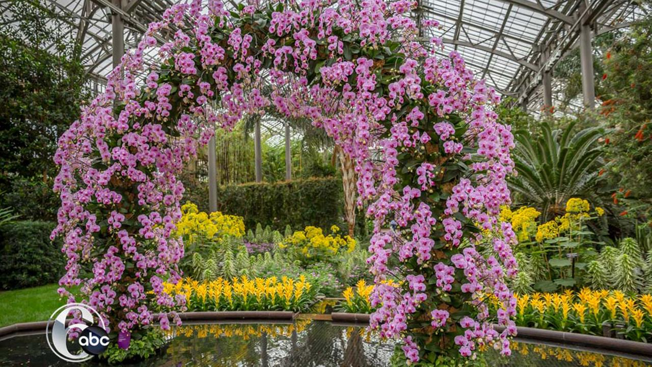 Orchid Extravaganza at Longwood Gardens in Kennett Square, Pennsylvania.Bob Watts