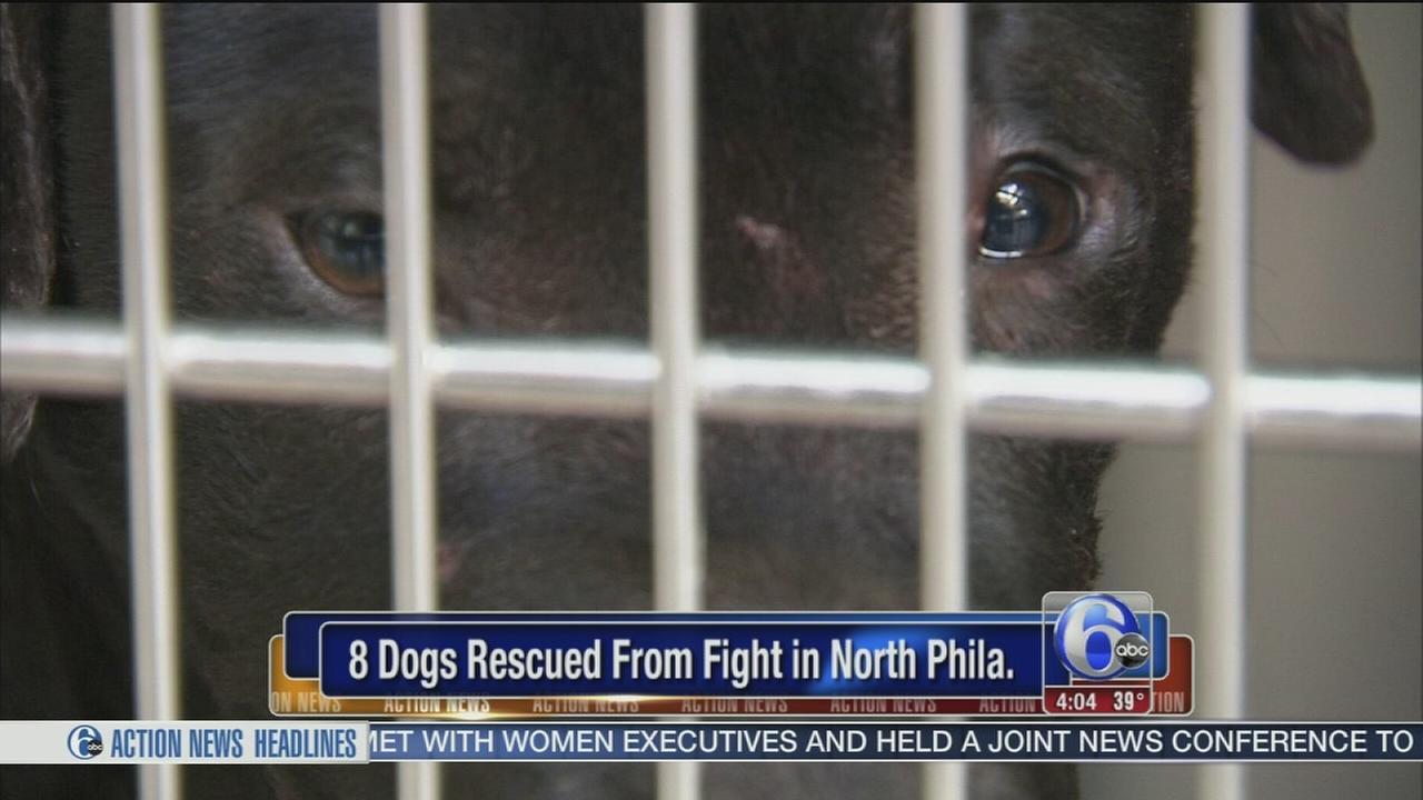 Pa. SPCA stops dog fight in North Philadelphia