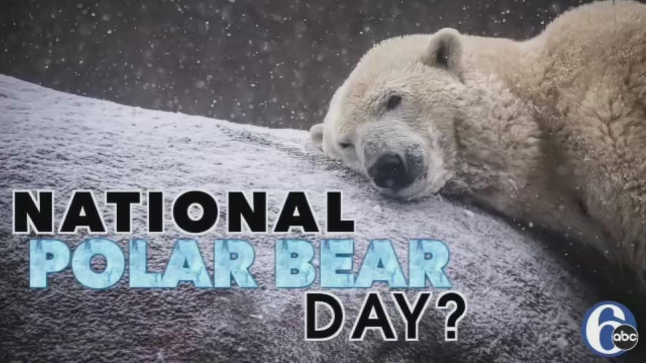 VIDEO: National Polar Bear Day