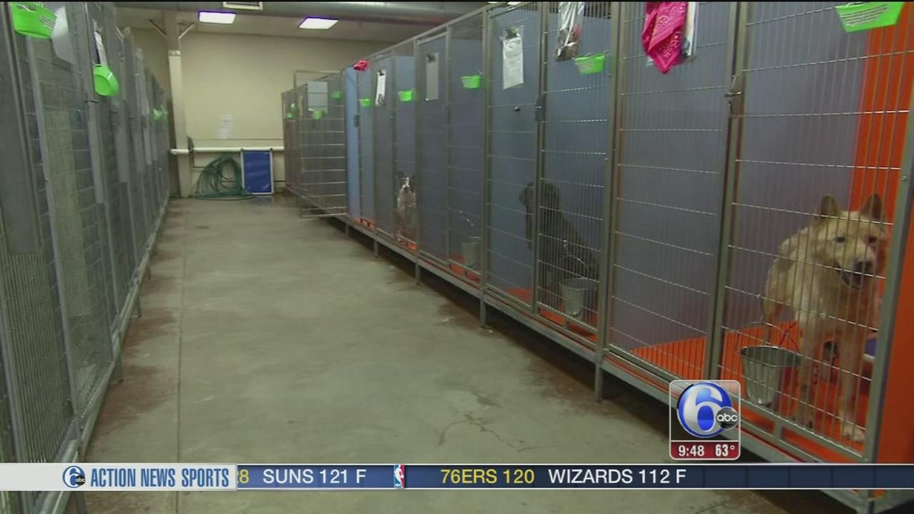 Shelter Me: Animal Care and Control Team of Philadelphia