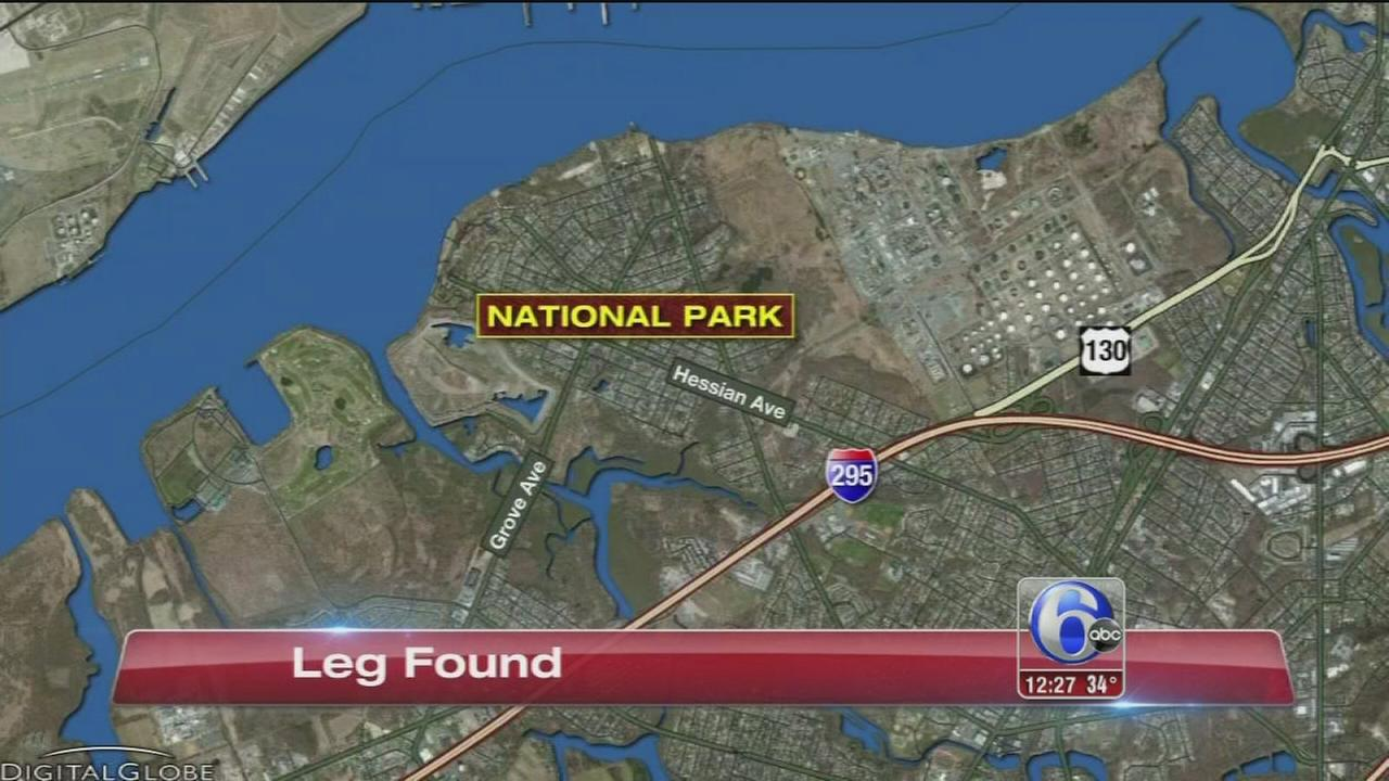 Woman discovers leg along Delaware River in NJ