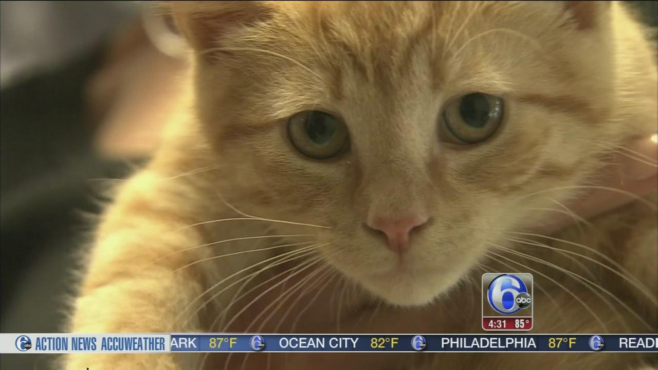 VIDEO: Teen burglar caught stealing kittens