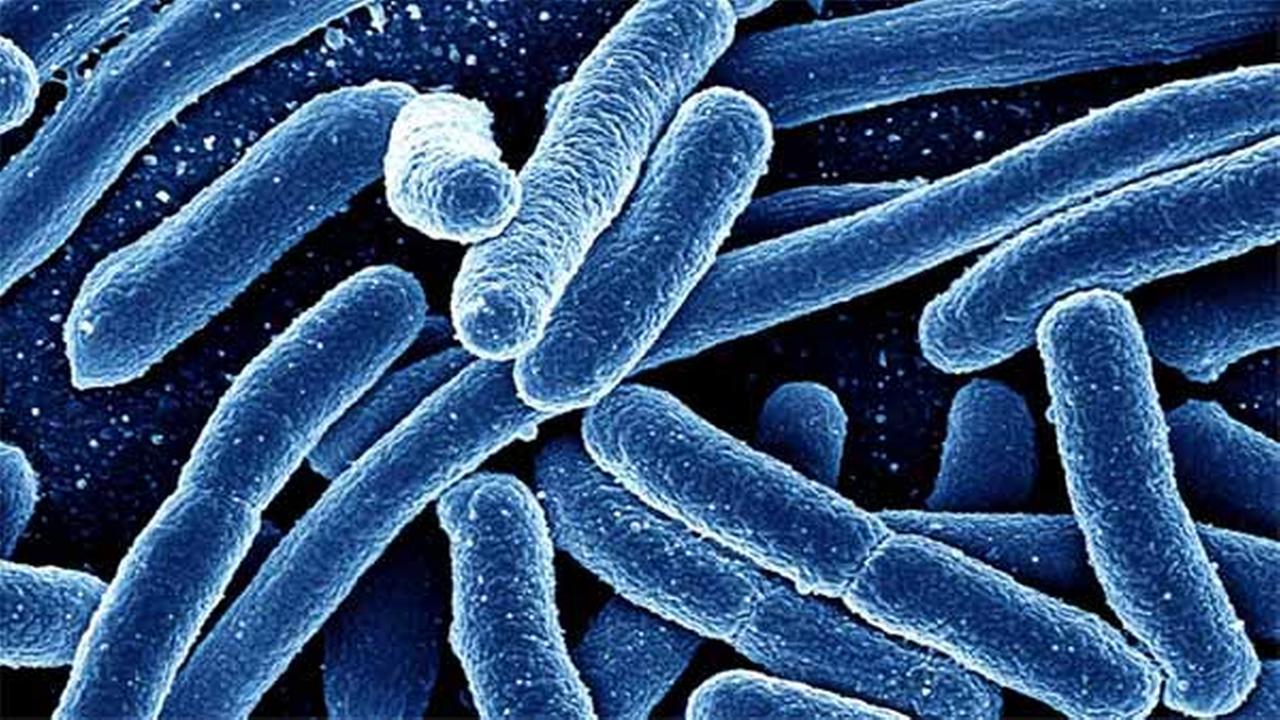 Federal health officials investigating multi-state E. coli outbreak