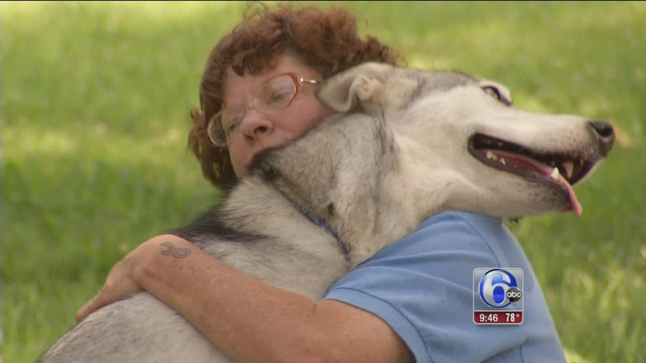 VIDEO: Shelter Me: MaPaw Siberian Husky Rescue