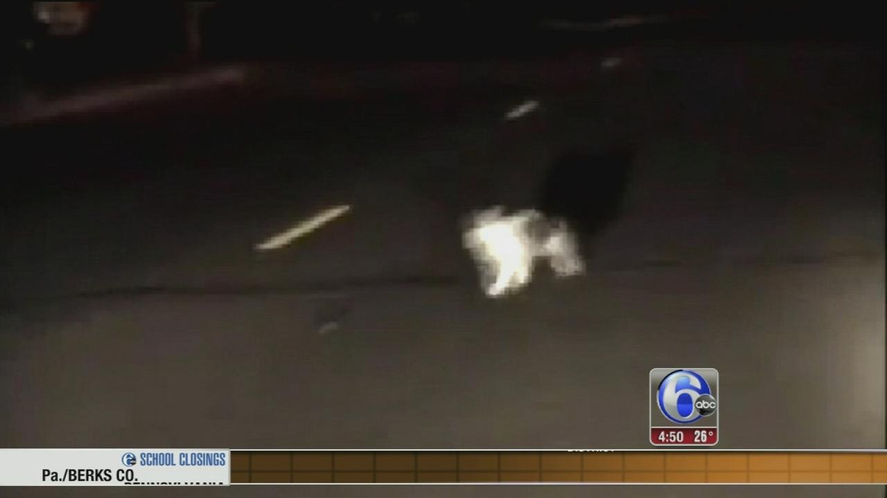 Minnesota police officer stumbles upon cat and mouse chase