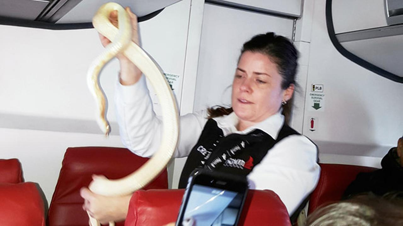 In this Sunday, March 19, 2017 photo, a flight attendant holds a snake found on a Ravn Alaska flight between Aniak, Alaska and Anchorage.