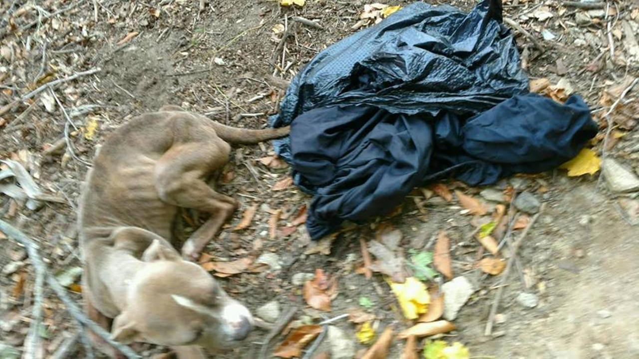 A Philadelphia police officer has been arrested after a dog named Cranberry was dumped in a trash bag last year in Philadelphias Wissahickon Valley Park.