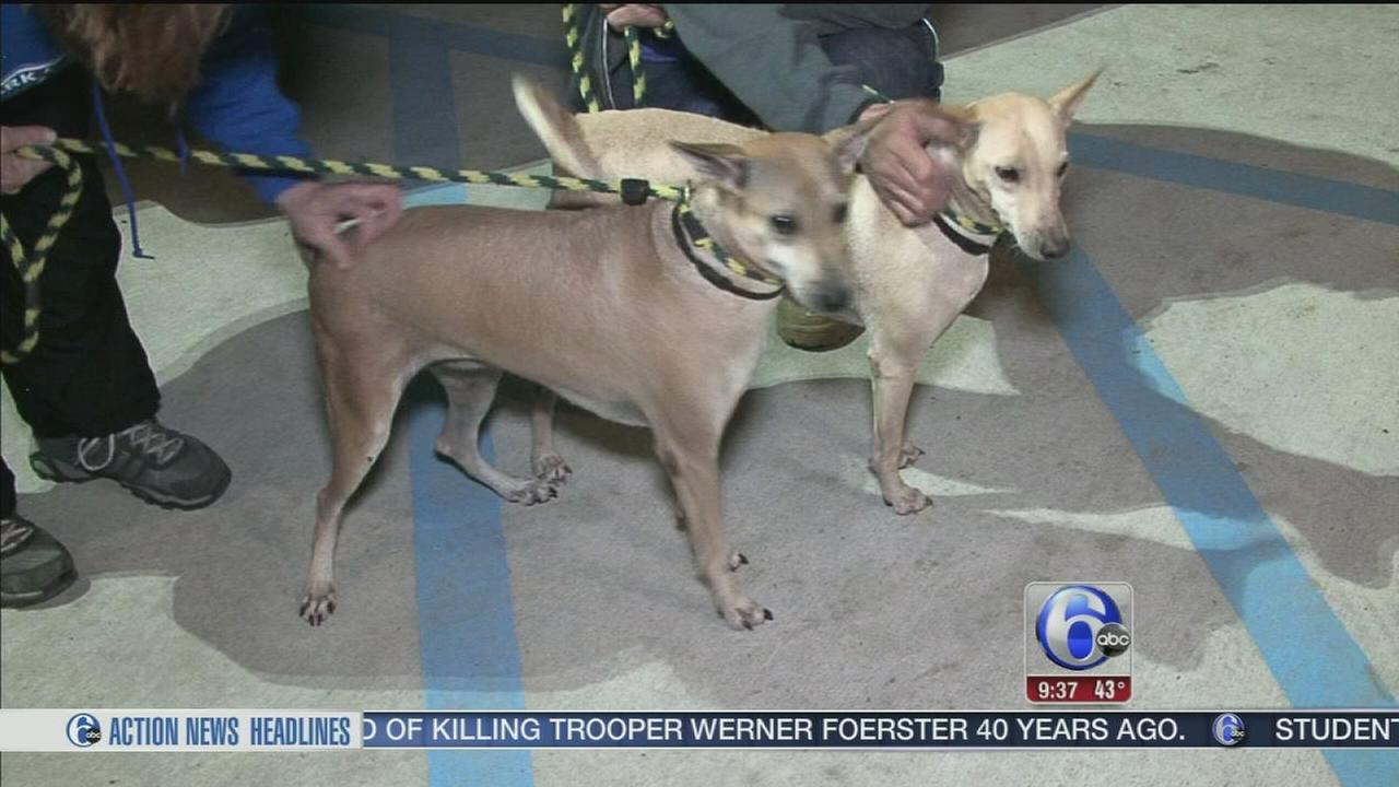 Dogs rescued in Thailand arrive in Media, Pa.