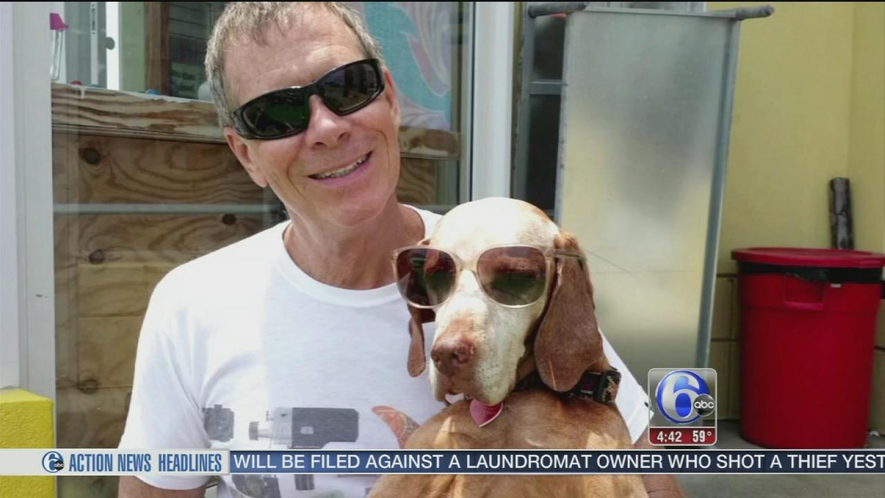 Owner facing charges after shooting terminally ill dog