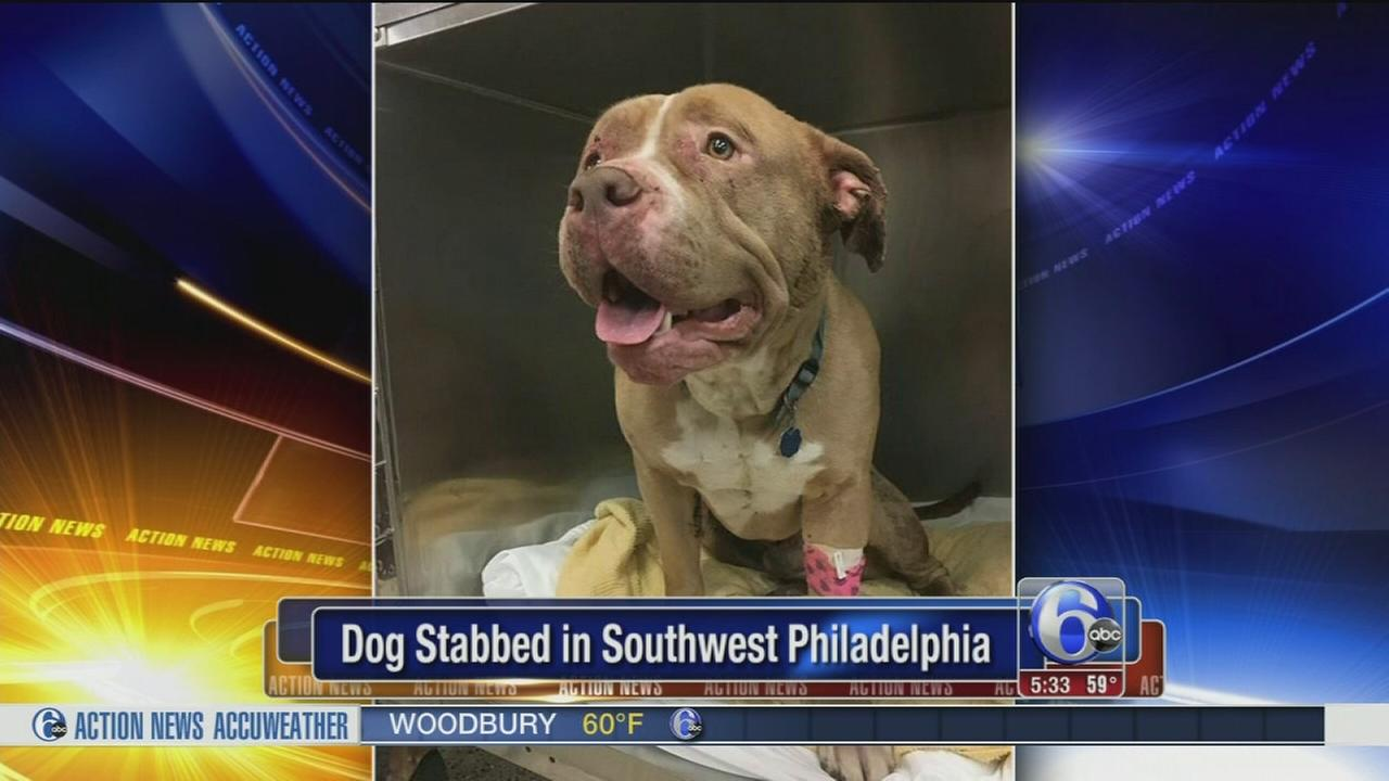 PSPCA searches for answers in dog stabbing