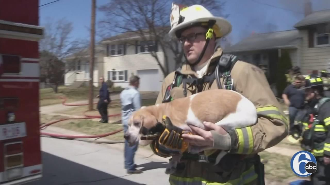 Raw video: Dog rescued from house fire