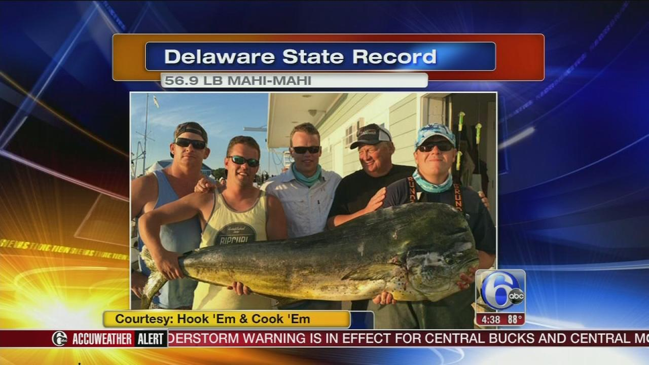 VIDEO: 57 lb. mahi mahi caught by Del. fisherman