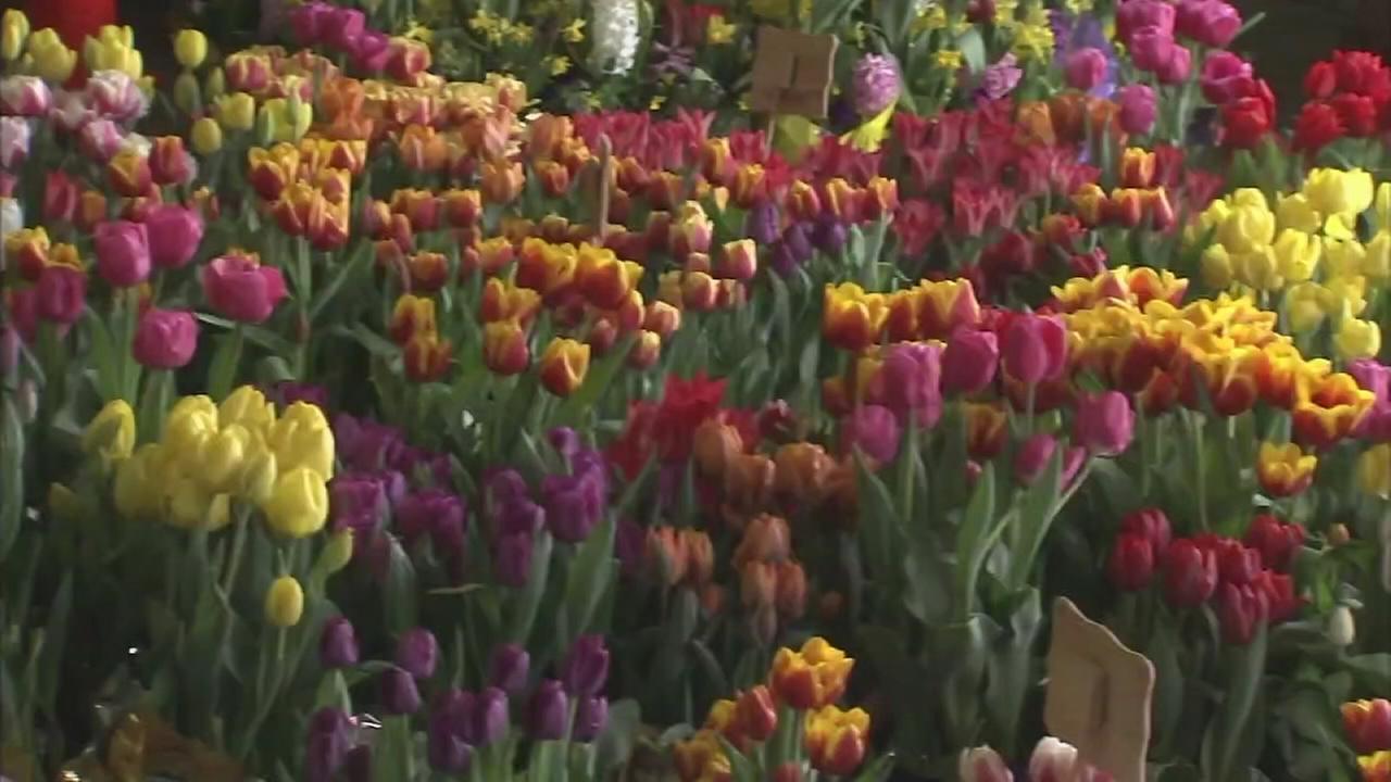 NJ residents buy Easter food, flowers