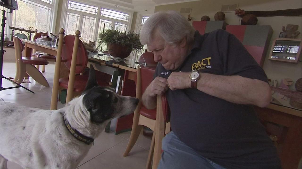 Art of Aging: Fostering pets for military families