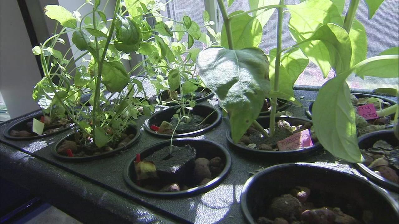 2 local schools receive Earth Day awards