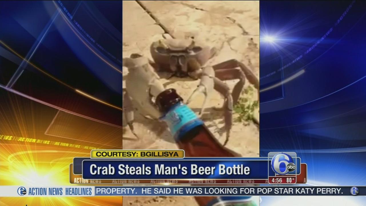 VIDEO: Crab steals mans beer