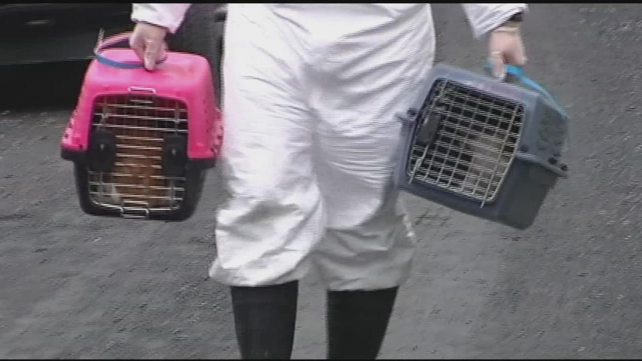 Dozens of animals rescued from Pennsylvania farm