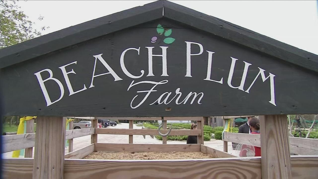 FYI Beach Plum Fest
